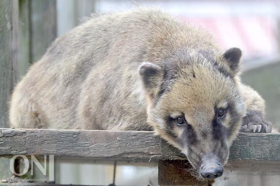 Zoo zu verkaufen - Ostfriesische Nachrichten